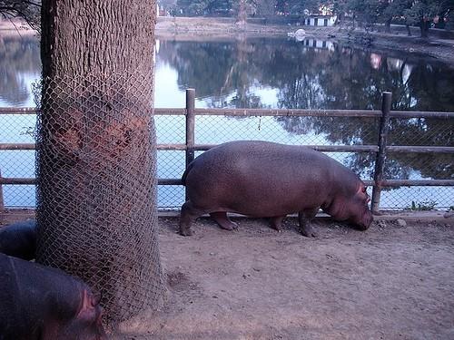 hipopotam din kathmandu
